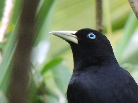 Horquetas, Kosta Rika: Birds of yatama