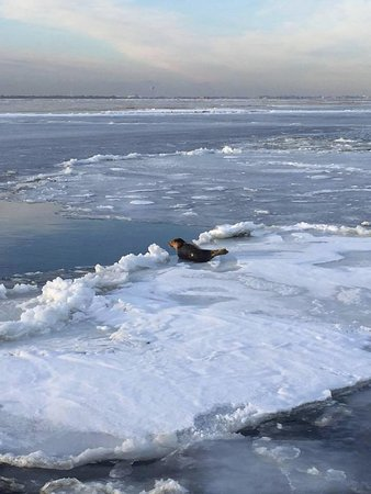 Freeport, NY: Seal Watching February 2015
