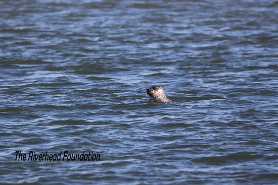 Freeport, NY: A Young Seal Saying hi !