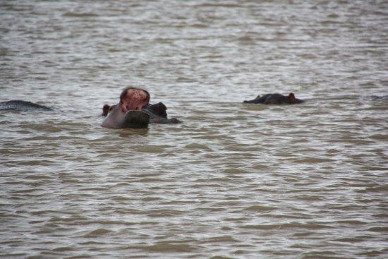 St Lucia, Republika Południowej Afryki: nijlpaarden