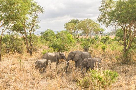 Morogoro, Tanzania: Elephants