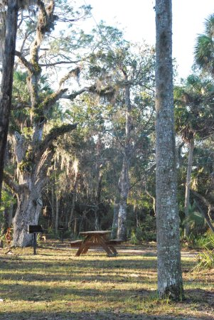 Ormond Beach, FL: Lots of great places to picnic in the park