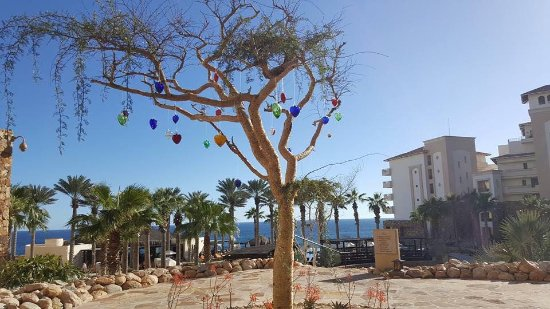 Grand Solmar Land's End Resort & Spa: Glass heart trees are found throughout the Resort, they embody how one feels here..full of love!