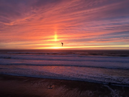 Surftides Lincoln City 사진
