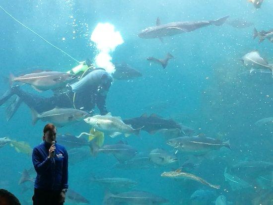 Atlanterhavsparken: IMG_20170223_130428_large.jpg