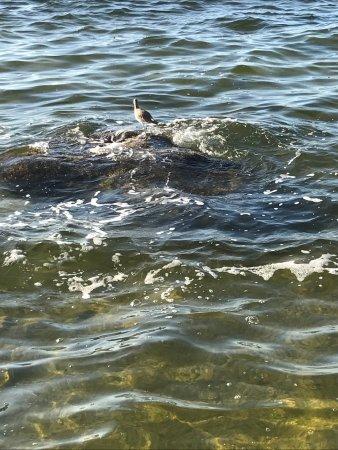 Port Richey, Floride : photo0.jpg