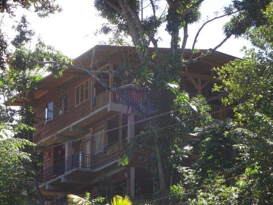 Castara, Tobago: Treetops, the top apartment