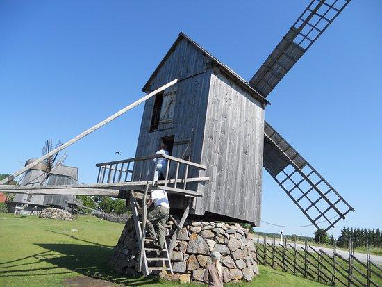 Saaremaa, Estland: Tuulimyllyihin saa tutustua myös sisältä.