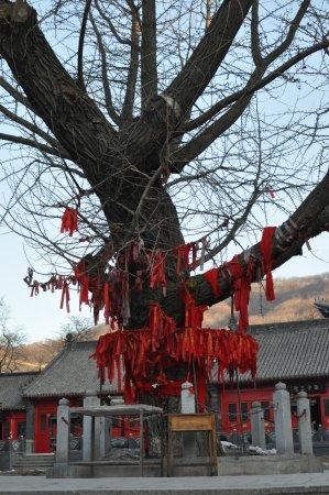 Dandong, Chiny: Baum mit roten Binden
