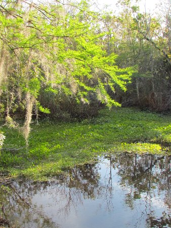 Welaka, FL: spring wash at Mud Springs trail
