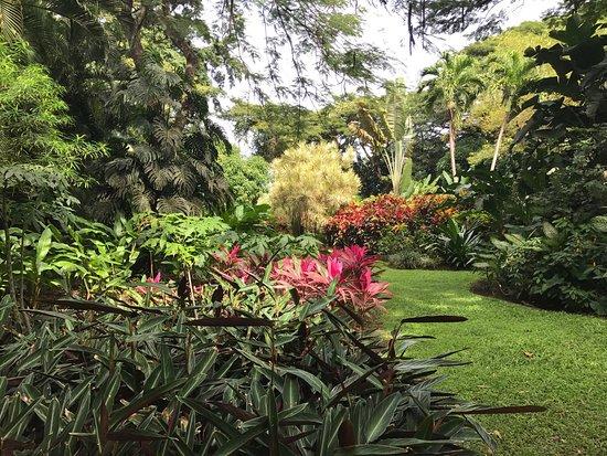 Deshaies, Guadeloupe: photo2.jpg