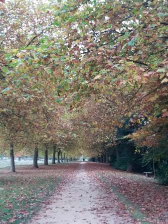 Бакингем, UK: Autumn walk