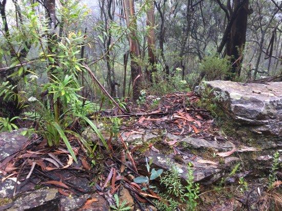 Leura, Australien: photo2.jpg