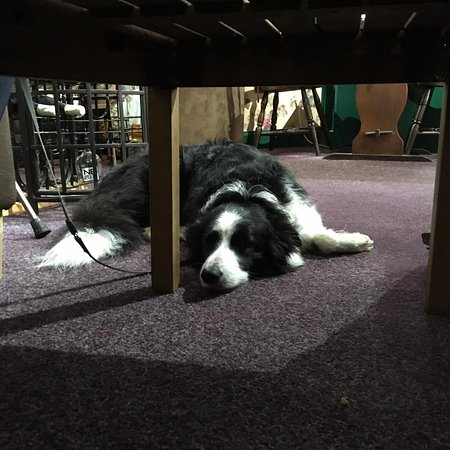 Abbey Fine Wines and cafe: Skye having a wee nap!