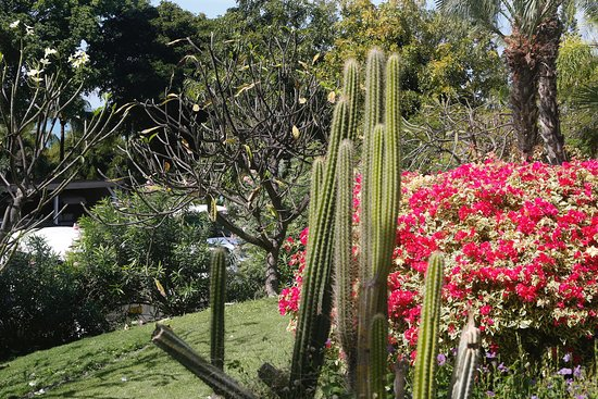 Blue Waters Antigua : Jardin très bien soigné