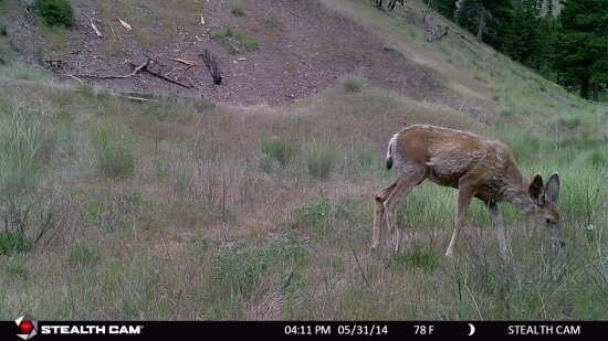 Clinton, MT: local wildlife on site