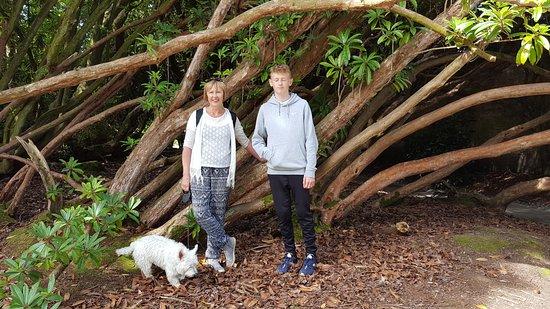 St Austell, UK: Tree-mendous picture!!