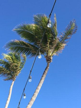 Tideline Ocean Resort & Spa: photo2.jpg