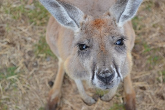 Cowes, Australien: How can you say no to this face?