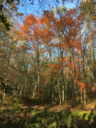 Johnston, RI: Beautiful Foliage in October In Snake Den State Park