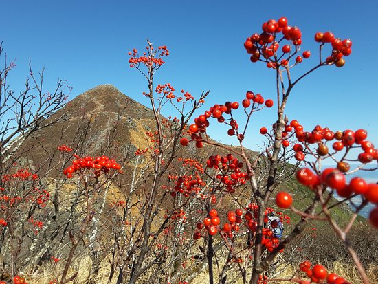 Mt. Iwaki: Mt Iawaki