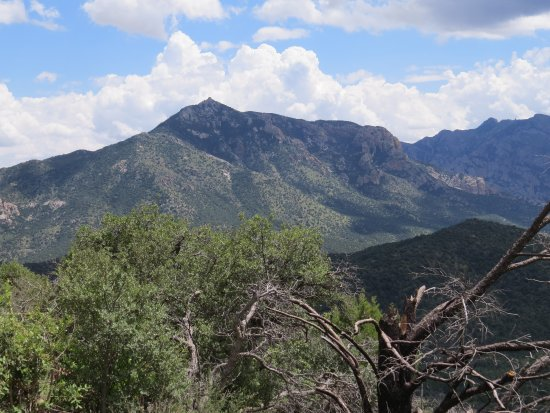 Portal, AZ: In the Coronado National Forest, the roads offer beautiful scenery on the way up to Rustler Park