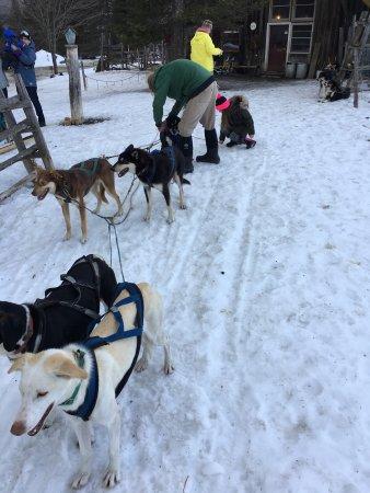 Eden Dogsledding: photo6.jpg