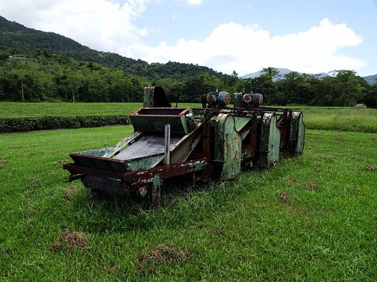 Daintree, Australia: Harvesting equipment