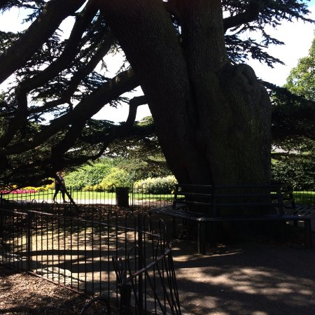 Westcliff-on-Sea, UK: A beautiful tree