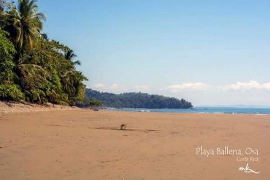 Province of Puntarenas, Costa Rica: Playa Ballena, es una playa poco conocida del Parque Nacional Marino Ballena. Hermosa y Tranquil