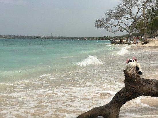 Isla Baru, Colombia: photo7.jpg