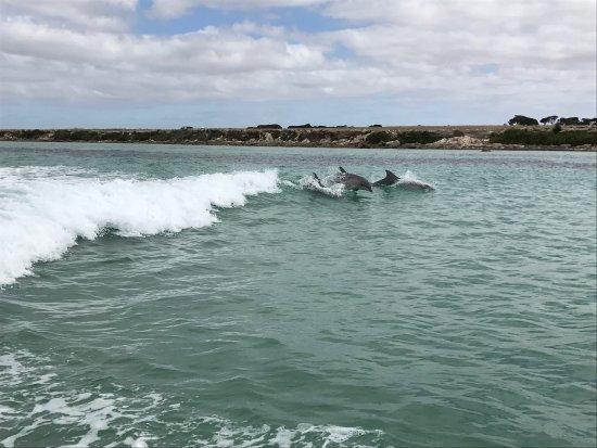 Kingscote, Australia: Kangaroo Island Marine Adventures