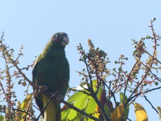 George Town, Wielki Kajman: Beautiful parrot