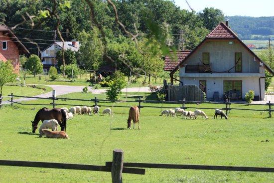 Farm Firbas张图片