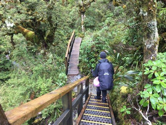 Fiordland National Park, Neuseeland: photo0.jpg