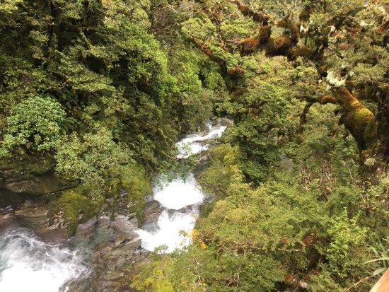 Fiordland National Park, Neuseeland: photo1.jpg