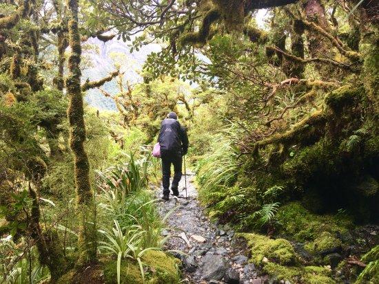 Fiordland National Park, Neuseeland: photo2.jpg
