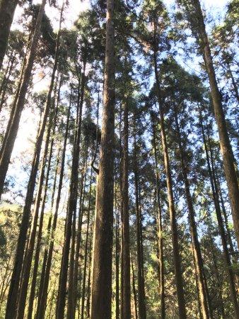 杉林溪森林生態渡假園區: Dec 2016