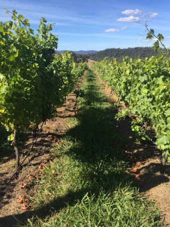 Sidmouth, Australia: Swinging Gate Vineyard