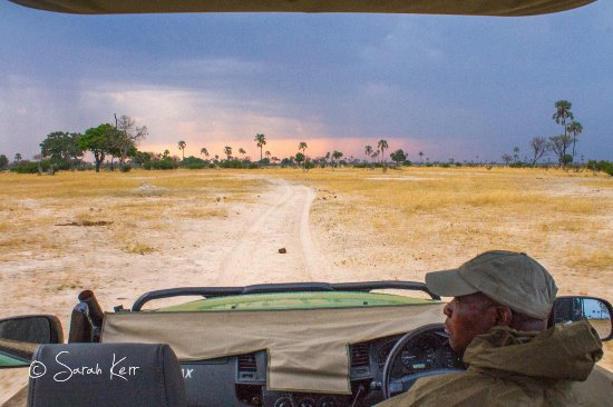 Hwange National Park, Zimbabwe: Game Drive with Livingstone, my guide at Linkwasha.