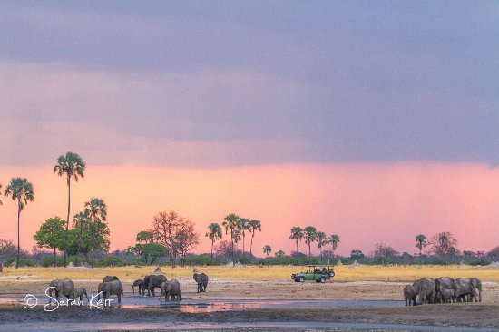 Hwange National Park, Zimbabwe: Game viewing at a waterhole near Linkwasha
