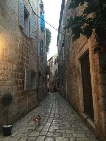 Stari Grad, โครเอเชีย: Hidden House on the left, in its charming street. Marmalde the cat.