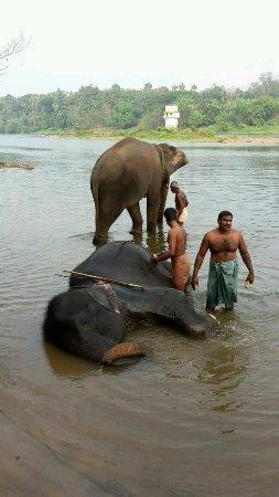 Kodanad, Inde : The elephants and Mahouts