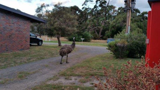 Halls Haven Resort: there are animals roaming around