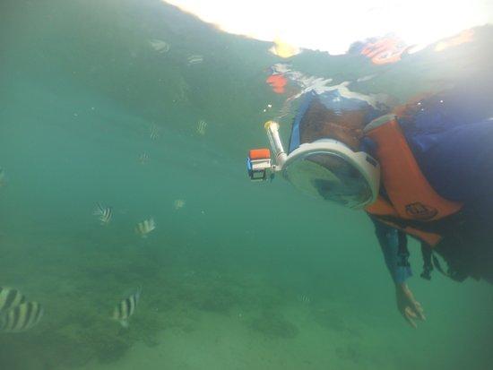 โรงแรมคามายัน บีช รีสอร์ท: Snorkeling