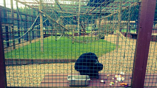 Newport, UK: Monkey