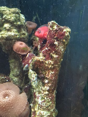 Tybee Island Marine Science Center : photo2.jpg