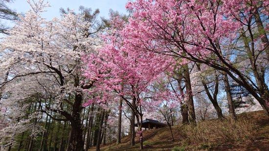 Kyozukayama Park