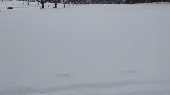 Plaines d'Abraham: neve no parque