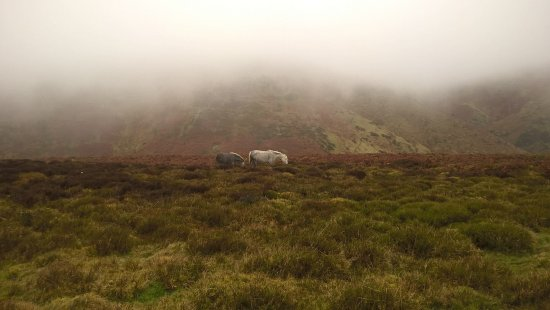 Church Stretton, UK: Ponies